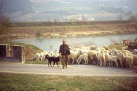 Ades Vita di golena a San Michele all'Adige